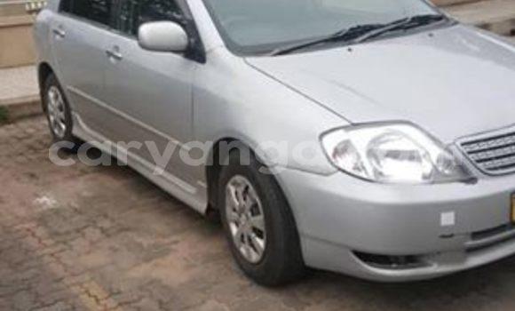 Buy Used Toyota Allex Silver Car in Blantyre in Malawi
