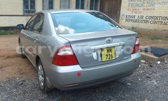 Buy Used Toyota Corolla Silver Car in Limbe in Malawi