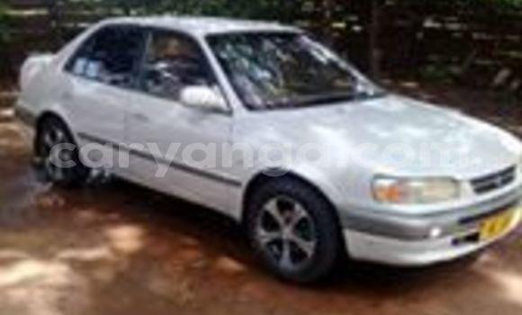 Buy Used Toyota Corolla White Car in Blantyre in Malawi