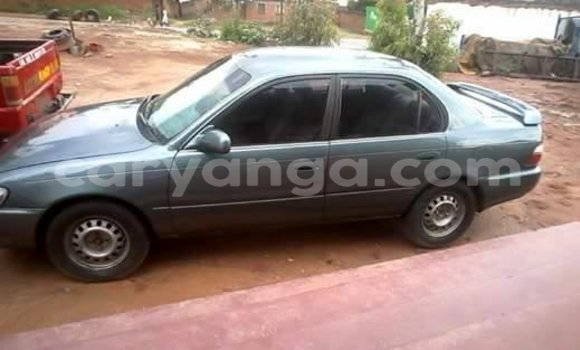 Buy Used Toyota Corolla Other Car in Limbe in Malawi