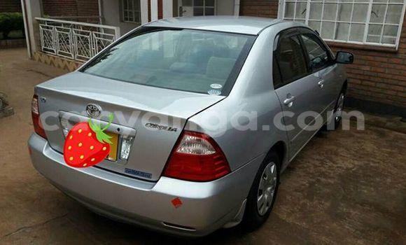 Buy Used Toyota Corolla Silver Car in Limete in Malawi