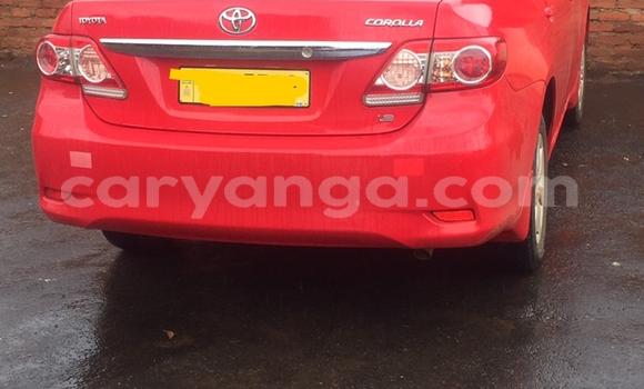 Buy Used Toyota Corolla Red Car in Lilongwe in Malawi