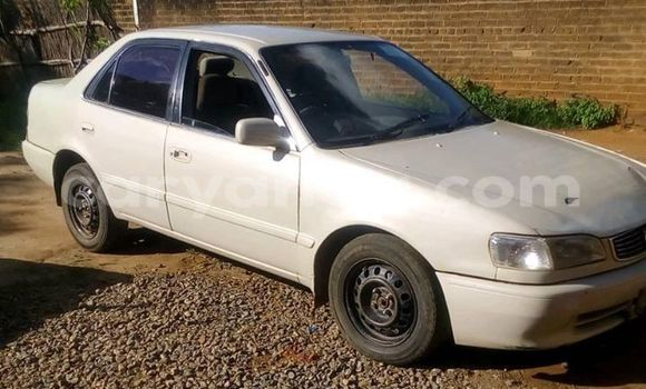 Buy Used Toyota Corolla White Car in Kasungu in Malawi